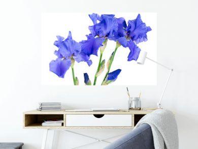 blue iris flower isolated on white