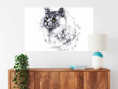 black and white longhair cat ink hand drawn illustration.