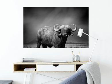 Black and white image of a buffalo