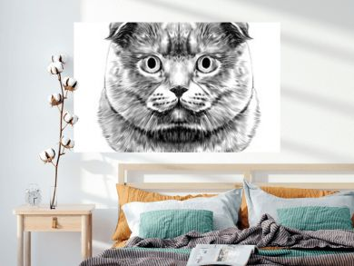 cat breed British lop-eared head thick symmetrical sketch vector graphics black and white drawing