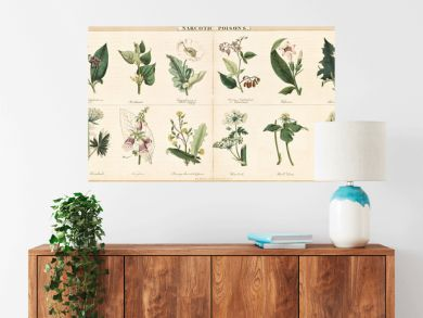 Vintage style illustration of a set of plants used to create narcotic poisons