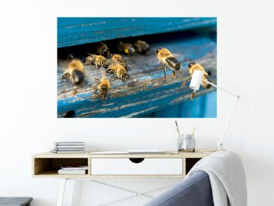 Life of bees. Worker bees. The bees bring honey.