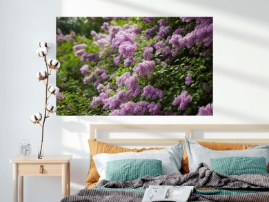 Spring blossoming lilac