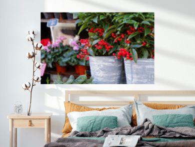 Fleuriste, vitrine et étalage - Jardinerie