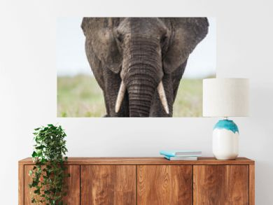 Big elephant in the savanna. Africa. Tanzania. Serengeti National Park.