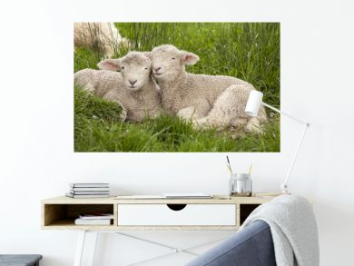 Cute cuddly fuzzy baby animals Spring lambs sheep siblings snuggling up together in green grass. They look like they are smiling. Happiness, love, togetherness, family, springtime concept.