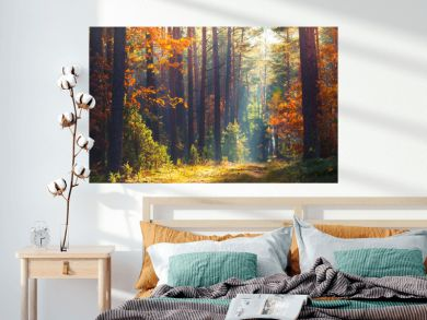Autumn forest scene