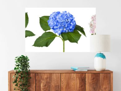 Nice white blue and pink hydrangeas
