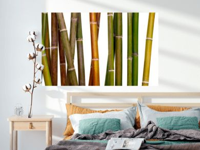 multicolored bamboo background, bamboo isolated on white background