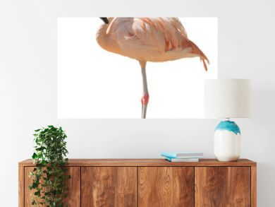 isolated on white one standing flamingo