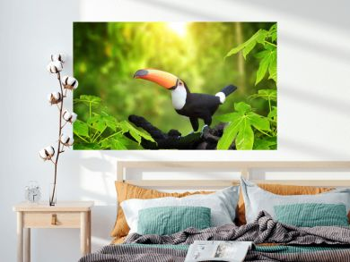 HBeautiful colorful toucan bird