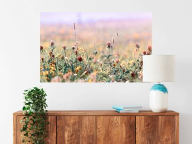 Beautiful meadow, flowering meadow flowers, flowering red clover