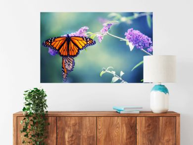 Butterfly on a lilac flower. The most famous butterfly of North America is the monarch's daaid. Gentle artistic photo. Soft selective focus.