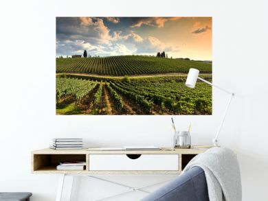 beautiful vineyard in tuscan countryside at sunset with cloudy sky in Italy.