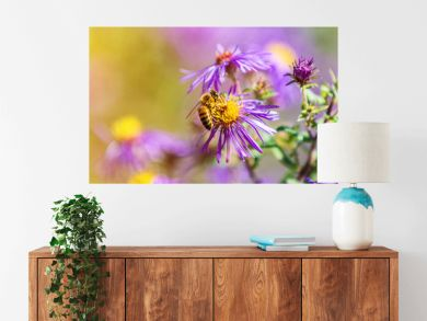 Honey bee pollinating purple aster flower in autumn fall garden nature background. Bees, flowers copy space panoramic banner.