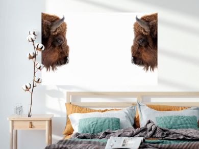 Two brown bull or bison heads with brown horns opposite each other before a fight on the New York Wall Street Stock Exchange on a white banner. Wyoming State Symbol.