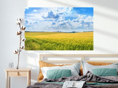 Rural landscape, panorama, banner - field of young wheat and country road in the rays of the summer sun