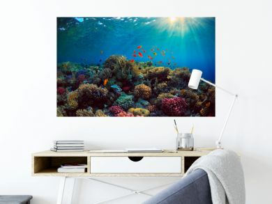 coral reef with fish underwater sea
