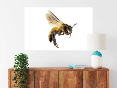 Golden honeybee or bee isolated on the white background
