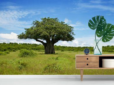 Baumlandschaft in Afrika