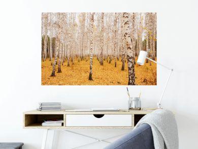 an autumn birchwood in October