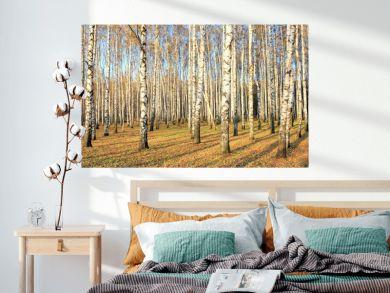 Birch grove in october