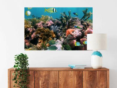 Colorful marine life in a coral reef with tropical fish and a starfish, Caribbean sea