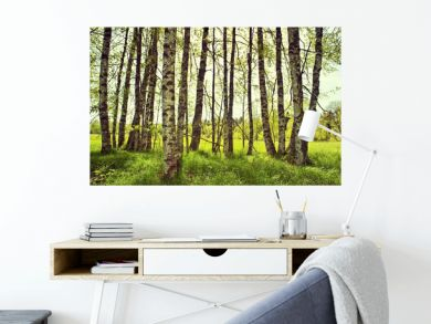 spring birch trees on a meadow