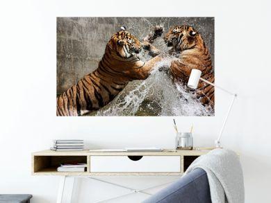 Tiger Battle