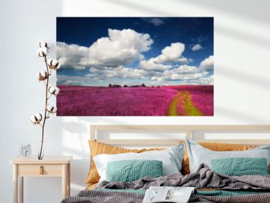 Magic Landscape – Pink Field and Sky with Real Stars