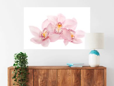 three rosy orchids isolated on white background
