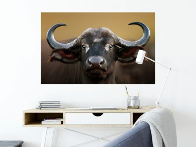 African buffalo Cow Portrait