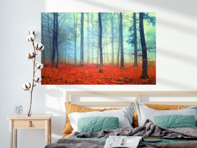 Autumn light forest scene