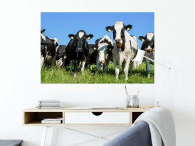 Breite Front einer Kuhherde vor landwirtschaftlichen Gebäuden