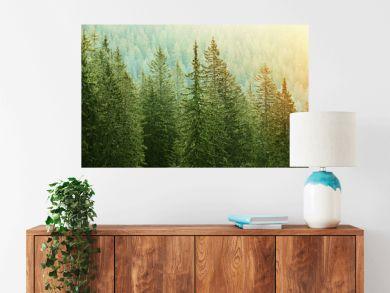 Green coniferous forest lit by sunlight