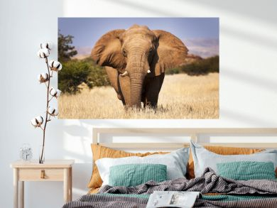 Elephant in the savannah, in Namibia, Africa, concept for traveling in Africa and Safari