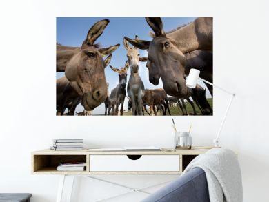 Donkeys staring at camera