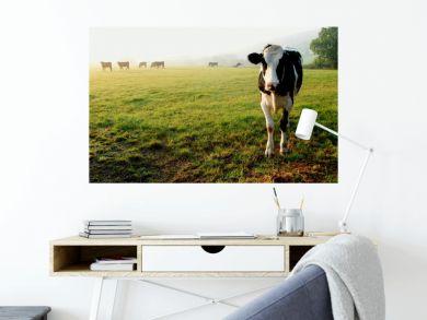 Herd of cows grazing on a farmland in Devon, England