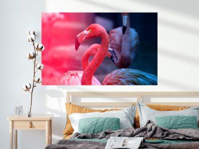 Photos beautiful red flamingo