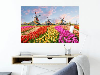 Landscape with tulips in Zaanse Schans, Netherlands, Europe