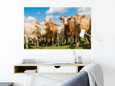 herd of brown cows on the green pasture with blue sky in summer