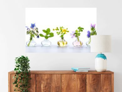 Herbs for alternative medicine, natural cosmetics and kitchen - Banner, Panorama - isolated on white background