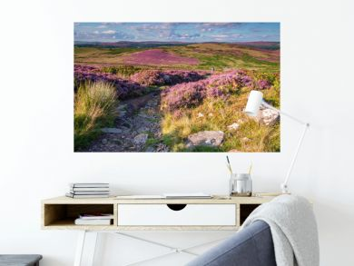 Footpath to Simonside Hills, popular with walkers and hikers they are covered with heather in summer, and are part of Northumberland National Park, overlooking the Cheviot Hills