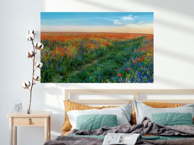 Big Panorama of poppies and bellsflowers field with path