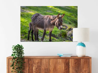 Donkey on the grassland