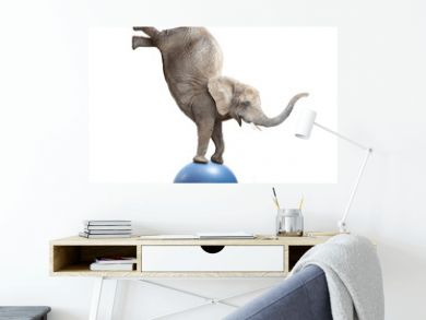 African elephant elephant balancing on a ball. Funny animals isolated on white background.