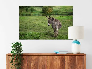 Donkey resting on green field