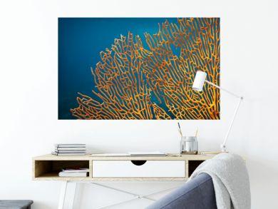 Orange soft coral Subergorgia sp or Subergorgonia, marine life, close up underwater background