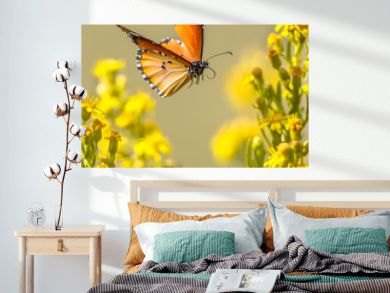 Flying butterfly Plain tiger between flowers