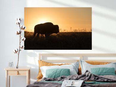 Buffalo profile with setting sun